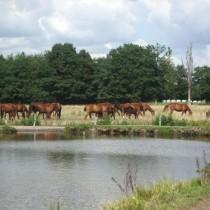 Pferde-030